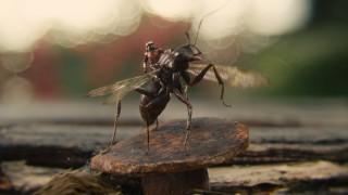 Evo nam Ant-Mana, evo nam čovjeka-mrava! Najmanji Marvelov junak ujedno je i klasno najobespravljeniji, ali barem ima tu sreću da na svoju stranu uspijeva pridobiti ne tehnologiju, nego organske postrojbe mravljih suboraca
