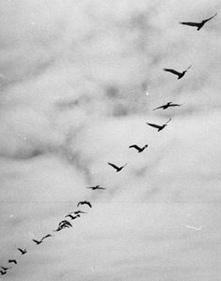 Ptice iznad Srebrenice - Bijelo