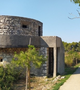molat_bunkeri__1_